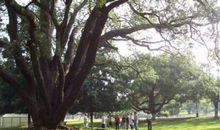 Green Heritage Walk